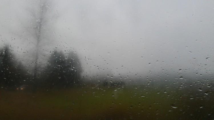 rain, rain on glass, tree