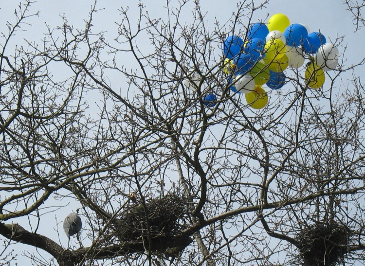 bird, balloons, tree,
